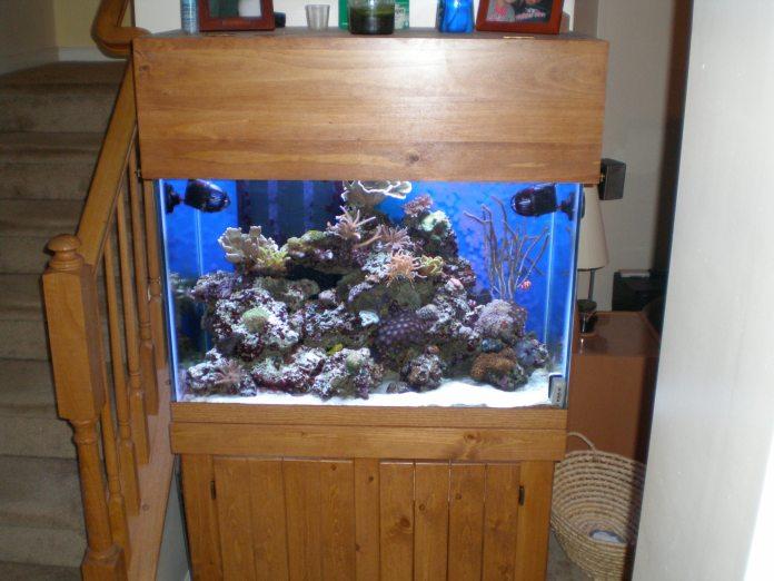 65 Gallon Reef