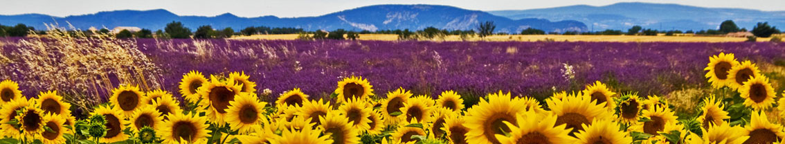 subpage-sunflowers-banner