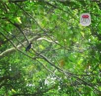 Bishan Park Kingfisher