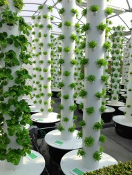 aeroponic Tower Gardens 1