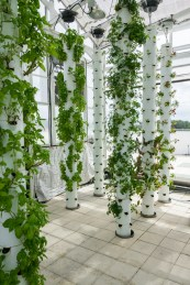 aeroponic Tower Gardens 2
