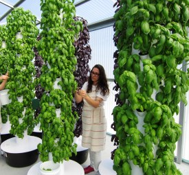 aeroponic Tower Gardens 4