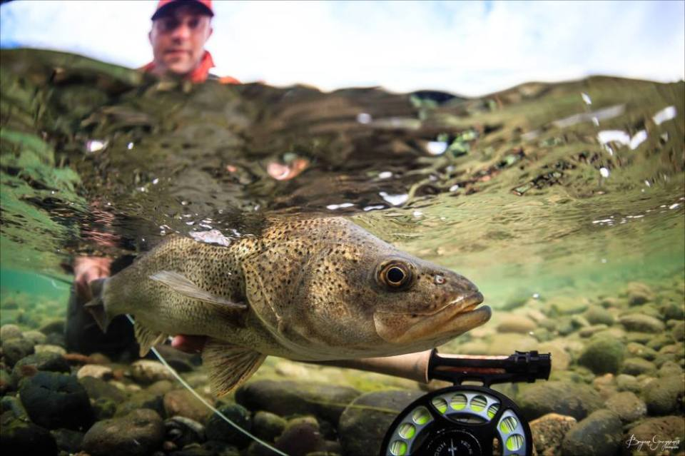 Argentina_ perca_Chocolate Lab Expeditions_Yellow Dog Flyfishing_Bryan Gregson
