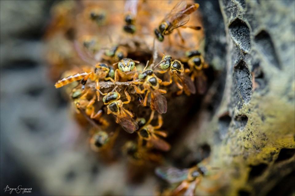 Bolivian-Bees_GP_8123