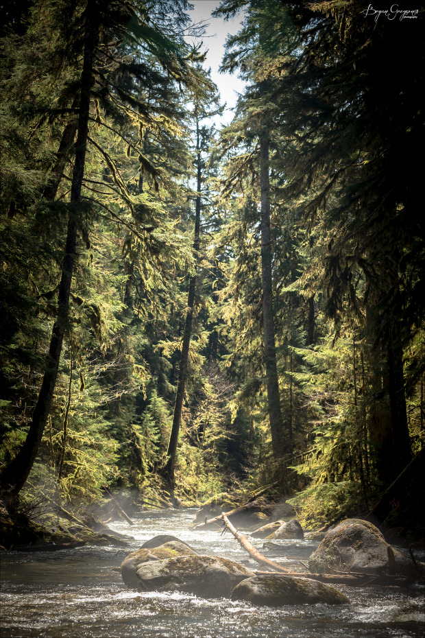 Chrome-Chaser-Lodge_Alaska_Forest_Bryan-Gregson-Photography_6
