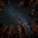 Bryan Gregson_stars-4
