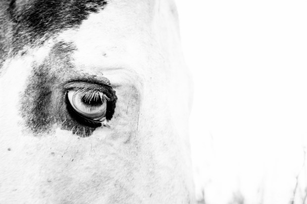 Gregson_Bryan_Paint Horse-3