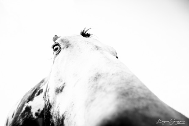 Gregson_Bryan_Paint Horse-4