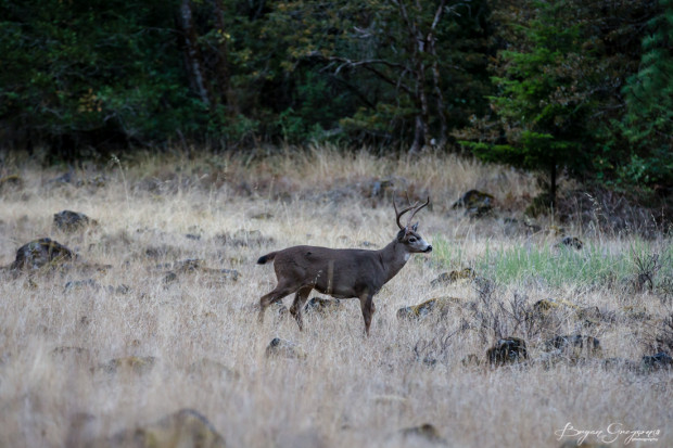 Gregson_Bryan_Rogue River Blog-5