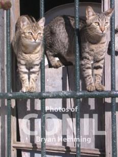 Conil cats 2 copy