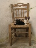 Cats' chair