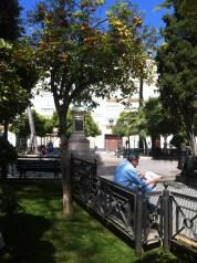 Orange tree plaza