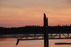 Bald eagle and sunset over Naknek River, King Salmon.