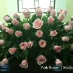 Floral choices Pink Roses