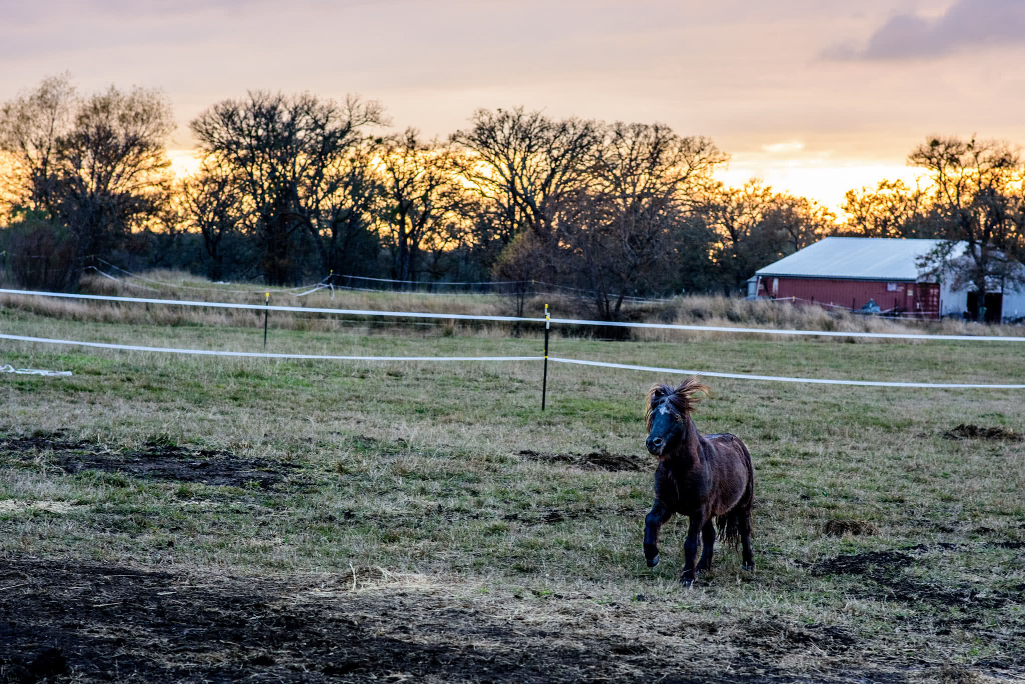 Pony at Sunset