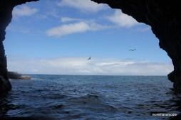 birds flying by cave napali coast kauai hawaii