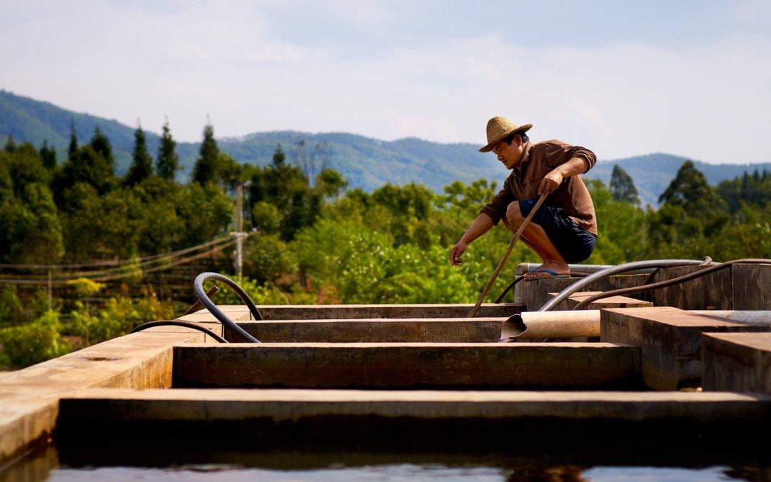 Coffee and Tea Farming in Yunnan, China – Mr. Li