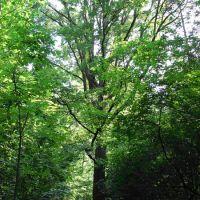 Pomniki Przyrody - Ekologia