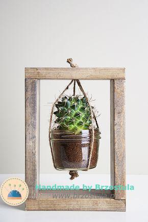 kaktus w ramce