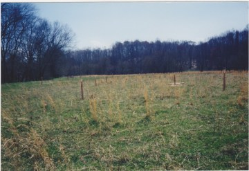 Completed Riparian Buffer