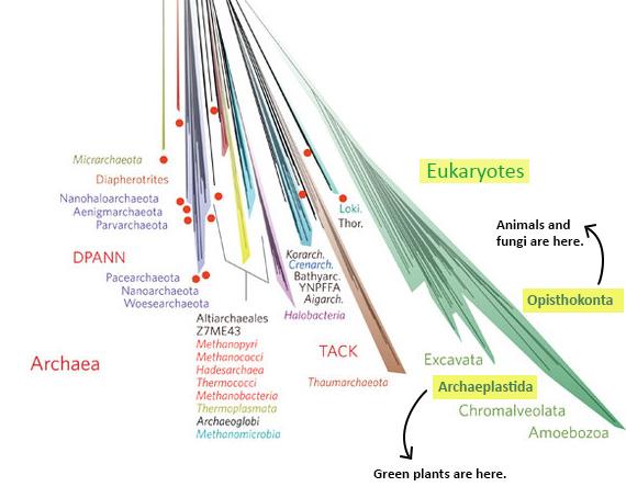 nature-tree-eukaryotes