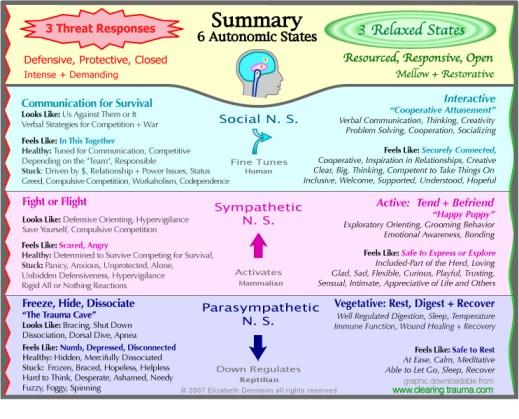 Summary-ANS