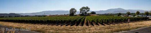 Vineyard bordering Silver Oak Winery