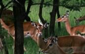 wildlife_pg3