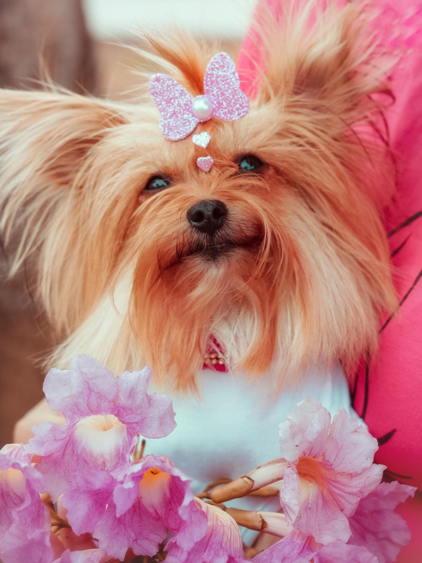câncer de mama em cães