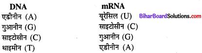 Bihar Board 12th Biology Model Question Paper 3 in Hindi 2