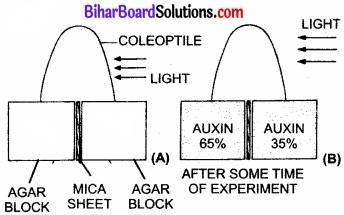 Bihar Board Class 11 Biology Chapter 15 पादप वृद्धि एवं परिवर्धन