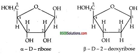 Bihar Board Class 12 Chemistry Solutions Chapter 14 Biomolecules 24