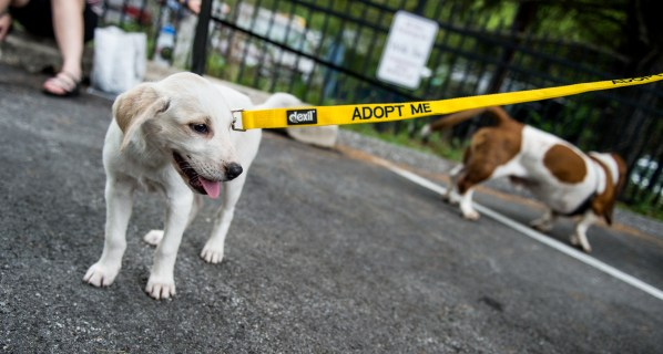 This puppy's leash says it all.