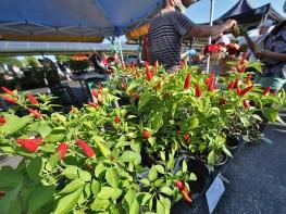 Bloomington community farmers market Aug. 22, 2020.