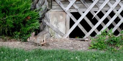 2021-07-02 bunnies IMG_2145