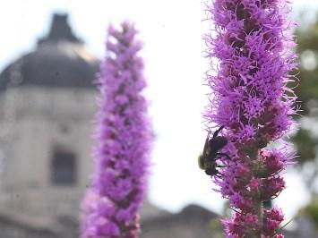 2021-07-24 bee IMG_5615
