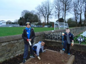 Busy planting bulbs in the garden