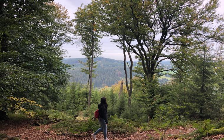 Romantikwanderung durch den Wald (II)