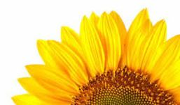 edibile-sunflower-oil