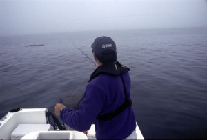 Working a kelp paddy with a fly rod