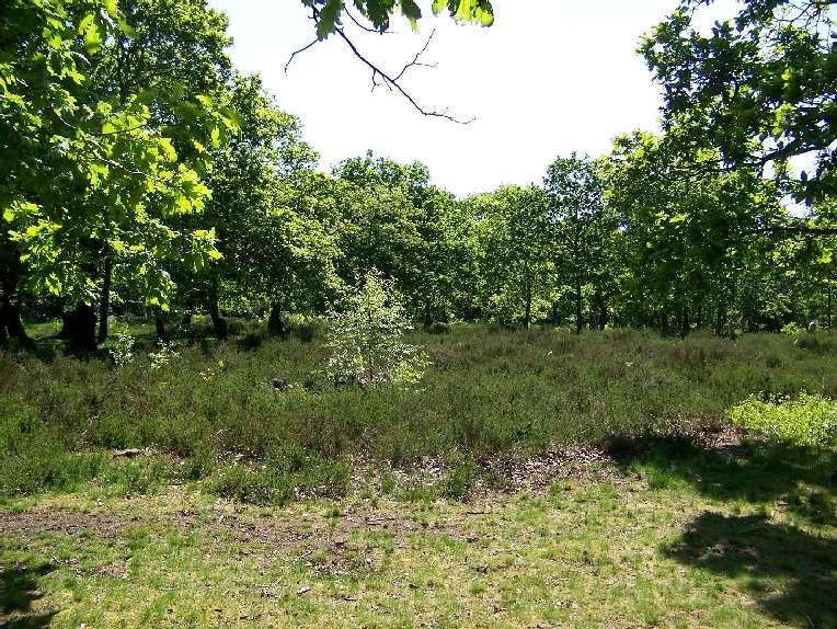 Invasive Pond Plants Uk