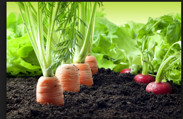 #Gardening Tips for Early Greenthumbs
