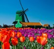 Tulips, Pigs and Eternal Graffiti: Bitcoin's Colourful Week