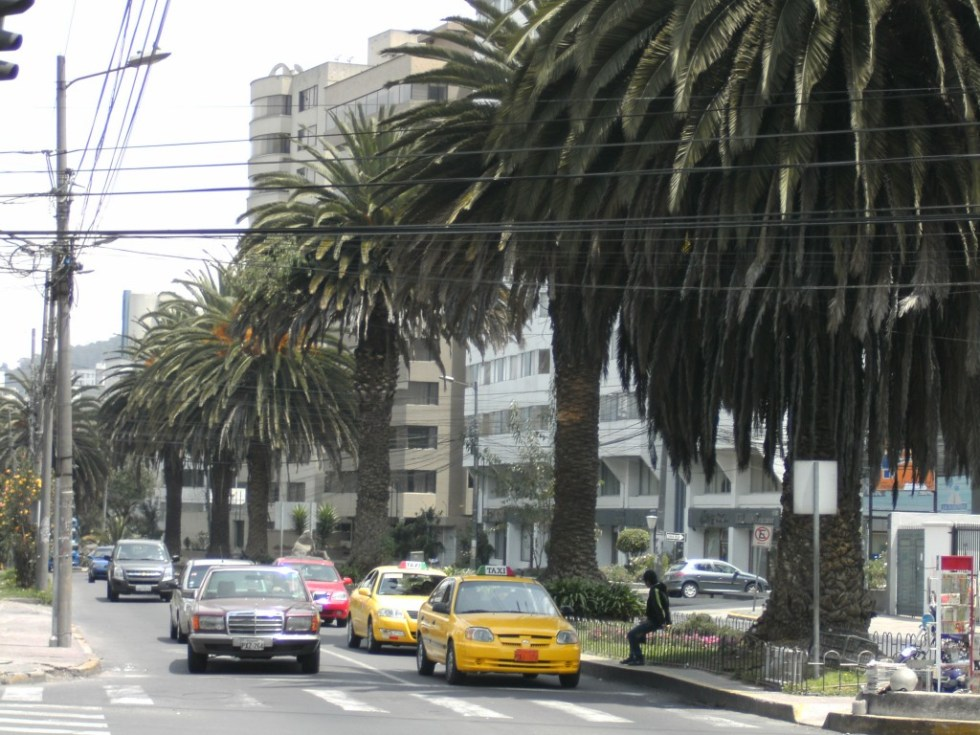Photo of traffic and palm trees on downtown street in Quito, Ecuador.