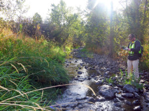 Ben Davis - Stream Assessment
