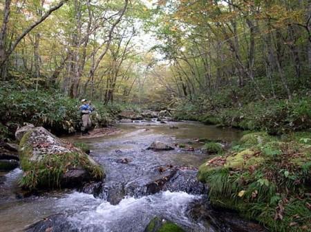 イワナと紅葉の溪