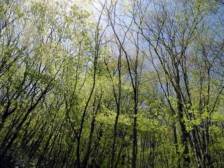 萌葱色の森