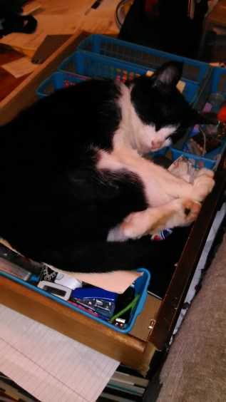 Stormy in drawer