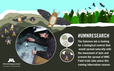 Saving Little Brown Myotis