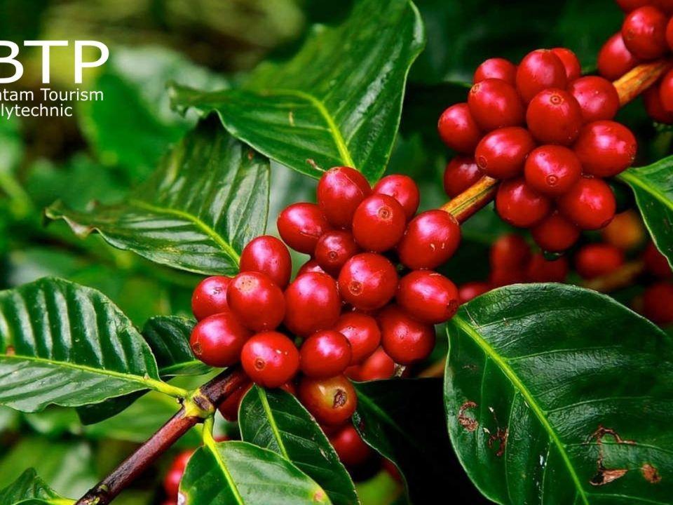 wisata kopi indonesia